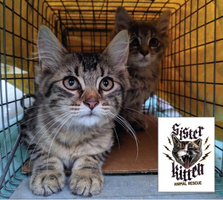 Sister Kitten Article